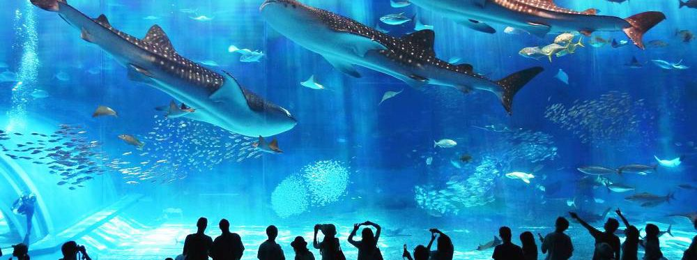 The 10 Most Amazing Aquariums In The World
