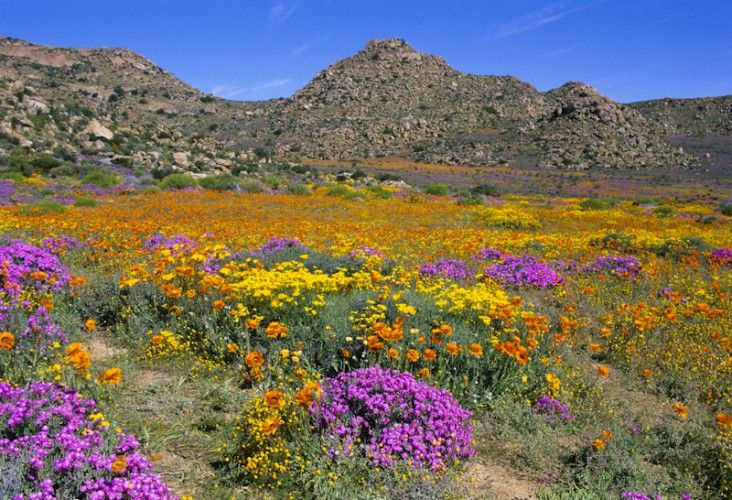 Tapestry-of-Namaqualand-South-Africa-732x500