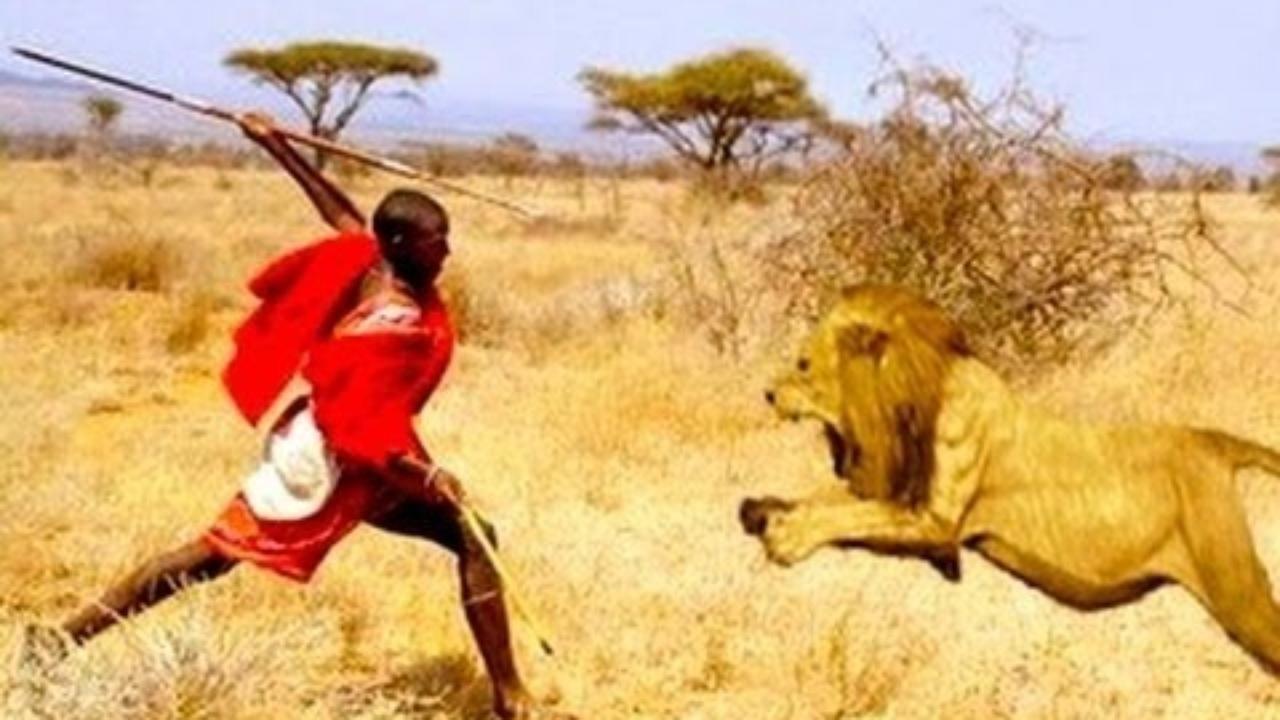 8. Maasai Lion Fighting