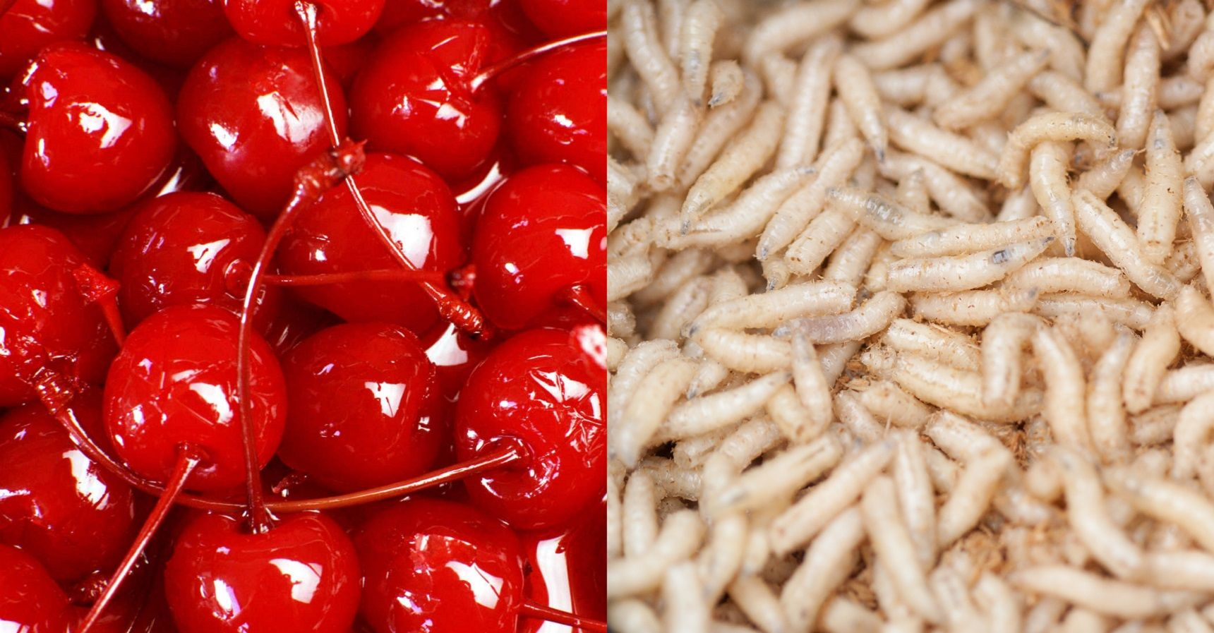 11 Of The Secretly Grossest Common Foods