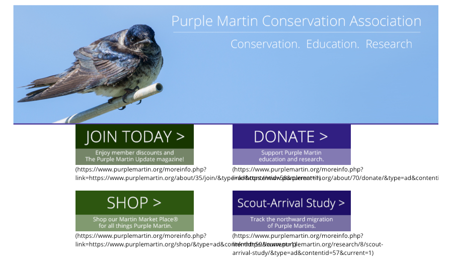 purplemartinCOM