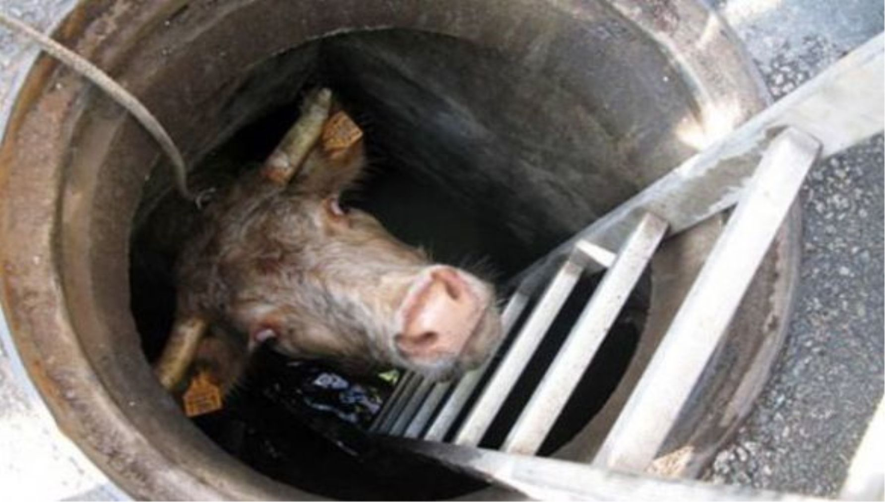 15 Most Shocking Things Ever Found In A Sewer