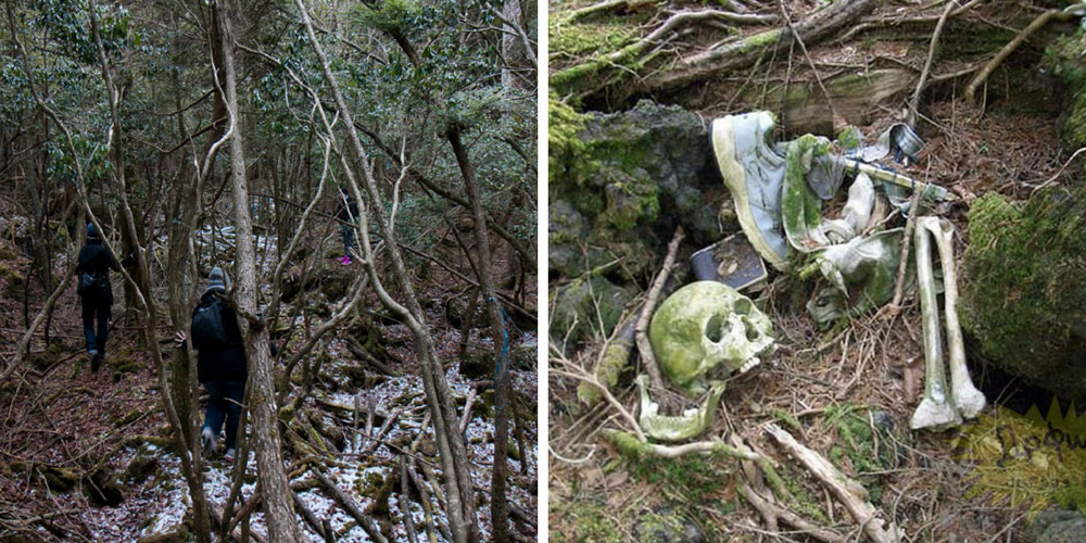 Things About Japan's Suicide Forest That Will Terrify You